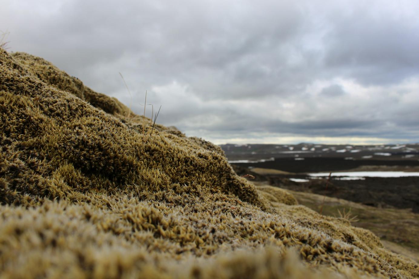 maybeyoulike_Iceland_5