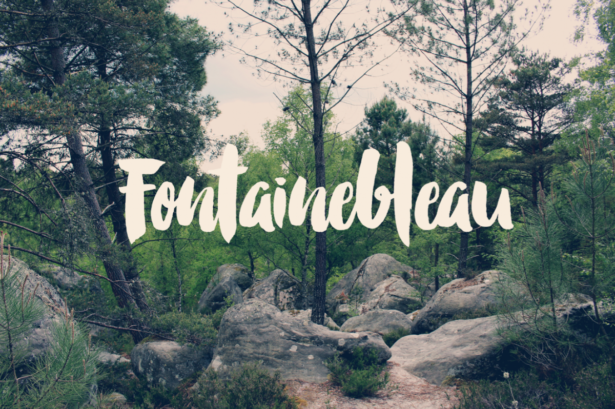 The magical forest of Fontainebleau