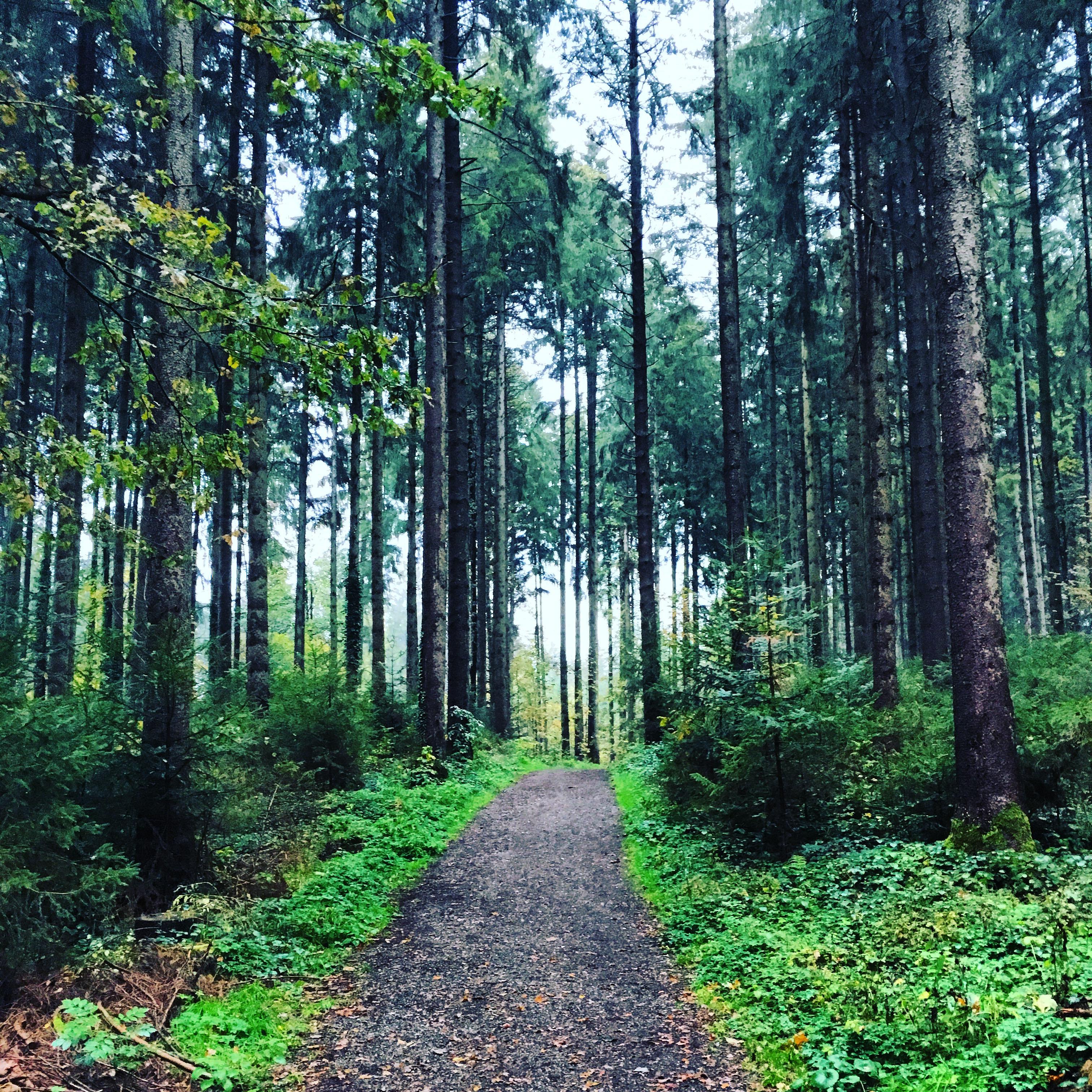 maybeyoulike_forest