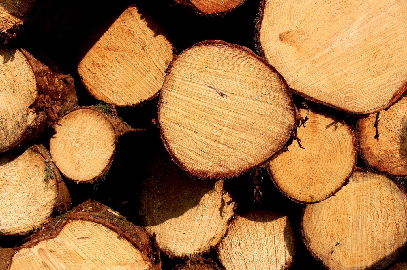 maybeyoulike_lumberjack_woods5