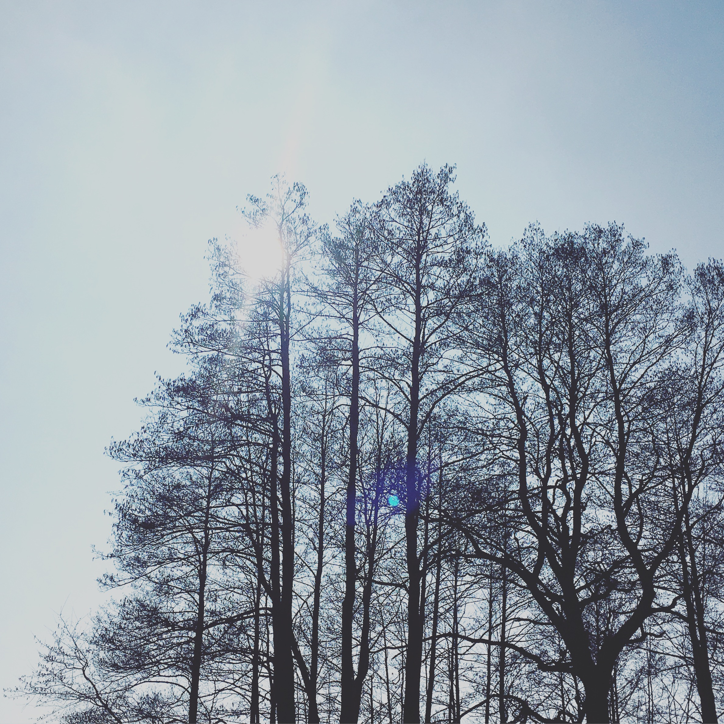 maybeyoulike_sun_trees
