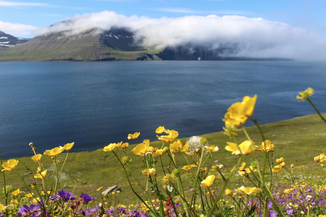 maybeyoulike_Iceland–Westfjords20