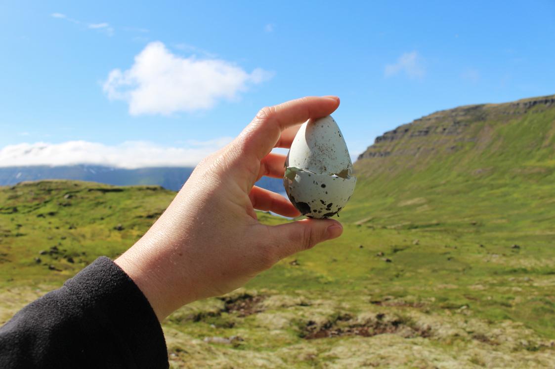 maybeyoulike_Iceland–Westfjords25