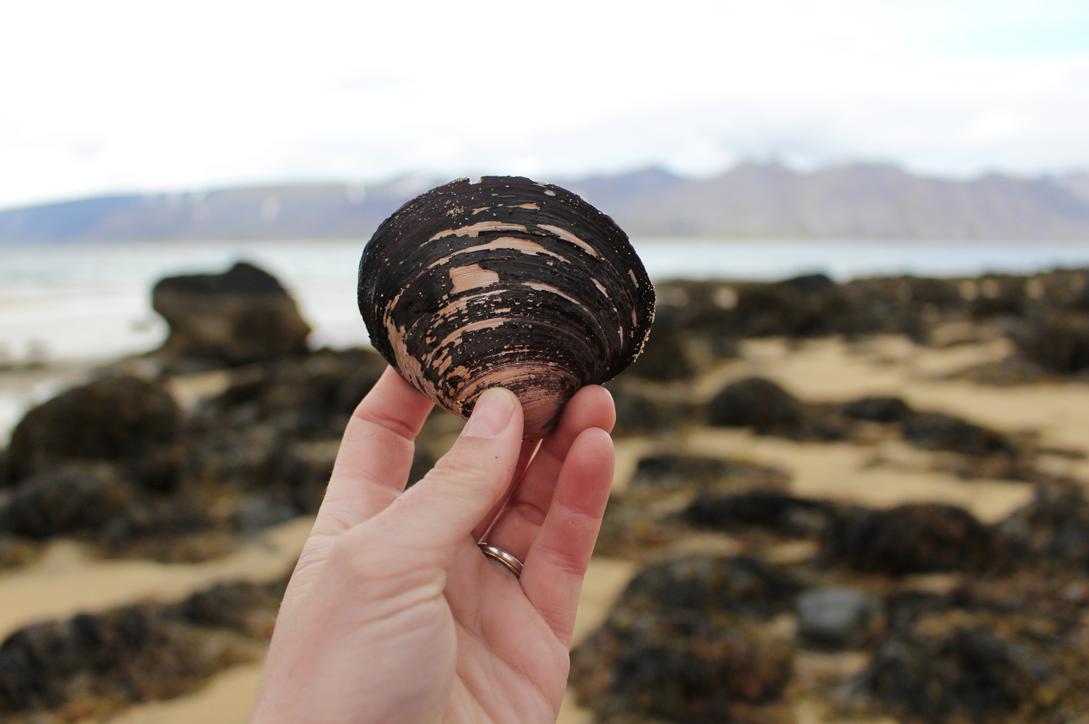 maybeyoulike_Iceland–Westfjords47