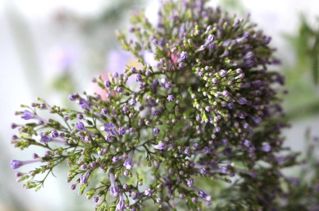 maybeyoulike_bloomon_flowers_5