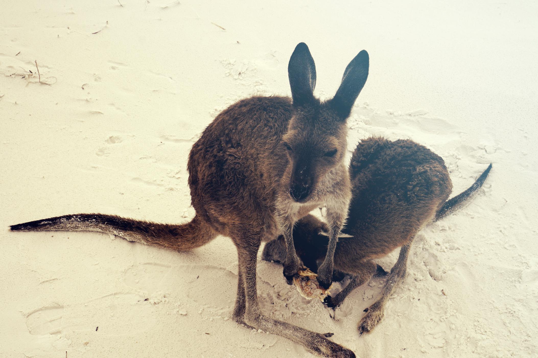 maybeyoulike_luckybay_australia_9